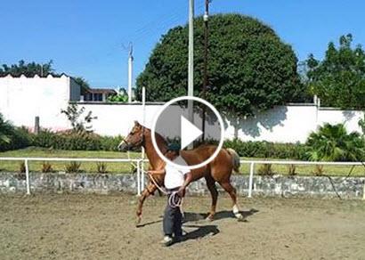 Video Alemex