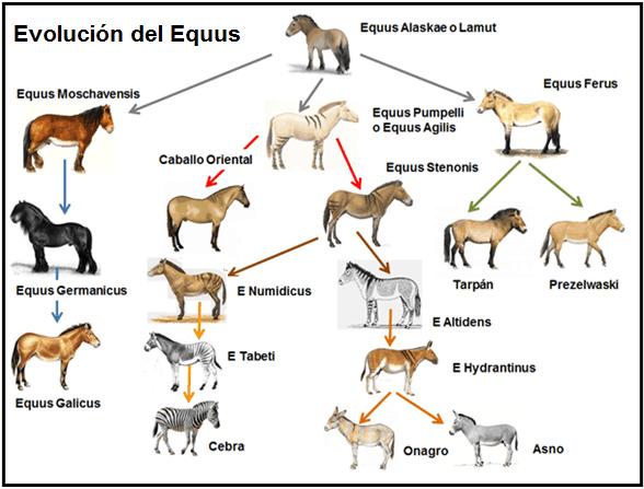 Evolucion del Equus | StallionMexSearch