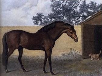 Godolphin Arabian | StallionMexSearch