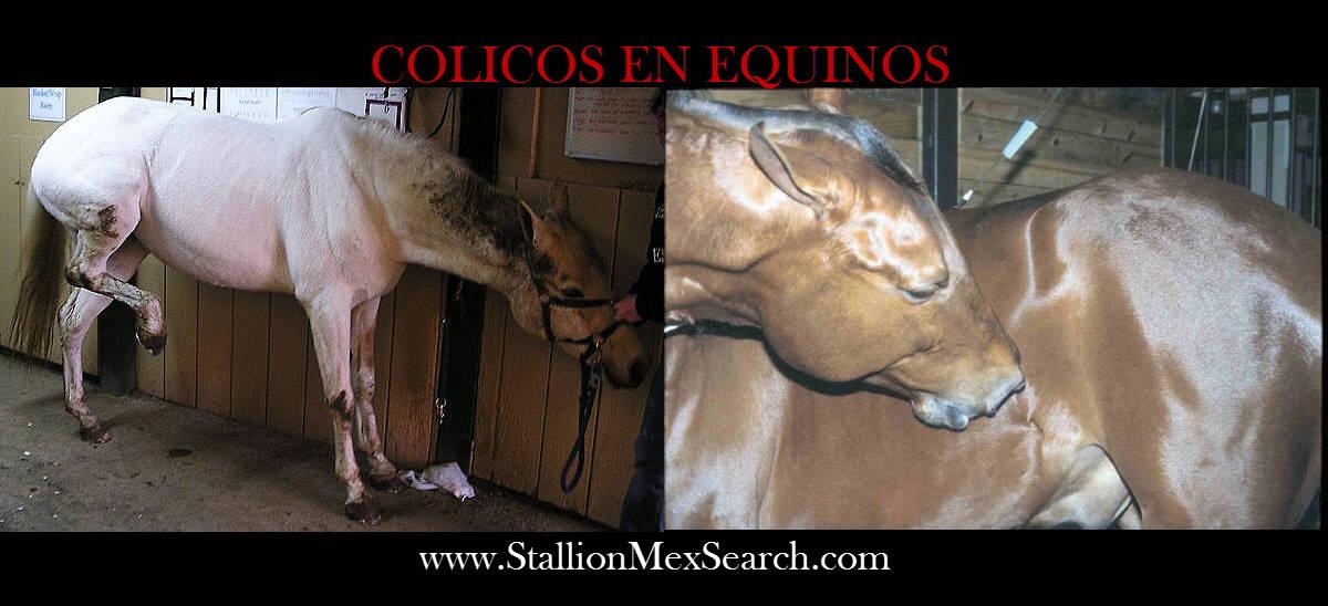 sintomas de caballos con parasitos