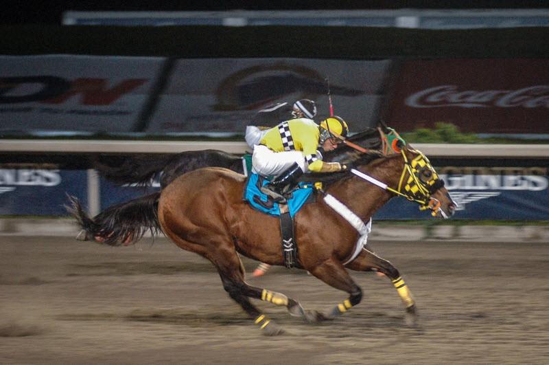 DERBY CRIADORES MEXICANOS 2015, PB EL CIRUJANO | Foto Miguel A. Espinoza, Hipodromo de Las Américas.
