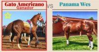 El Gato Americano Gano Al Panama Wes