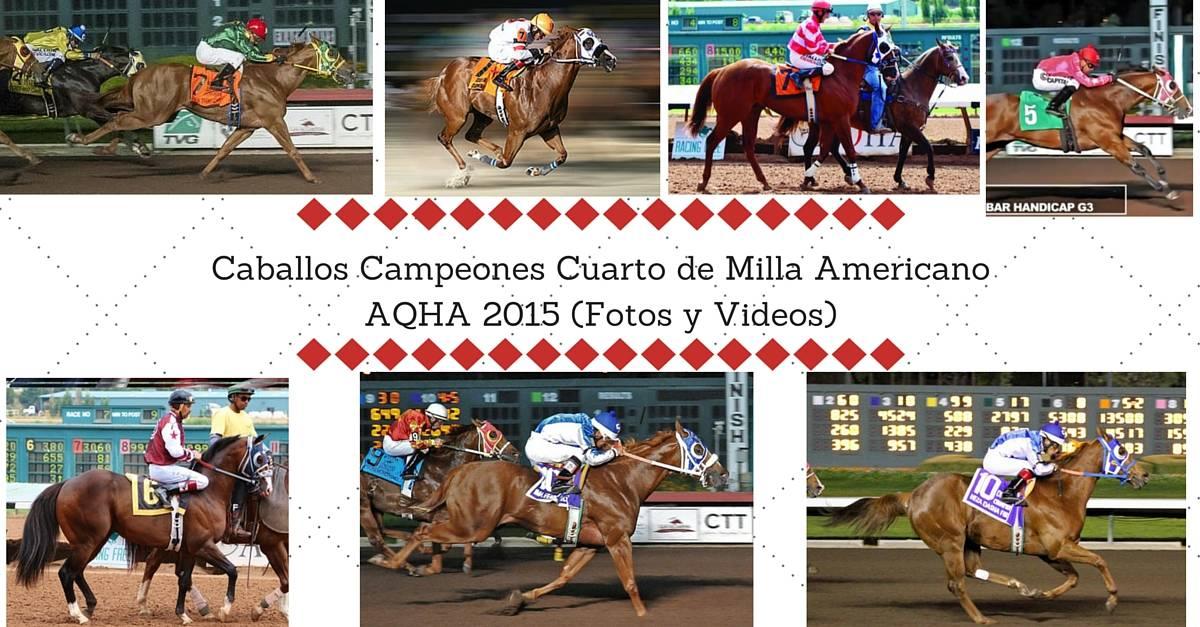 Caballos Campeones Cuarto de Milla Americano AQHA 2015 (Fotos y Videos) (1)