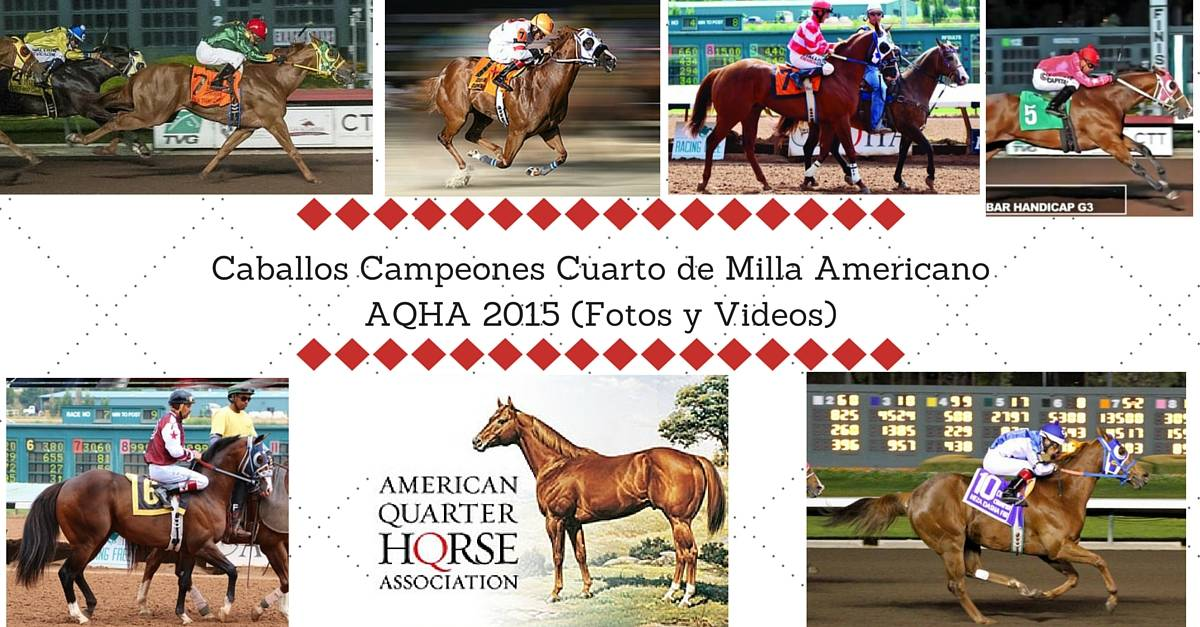 Caballos Campeones Cuarto de Milla Americano AQHA 2015 (Fotos y Videos)
