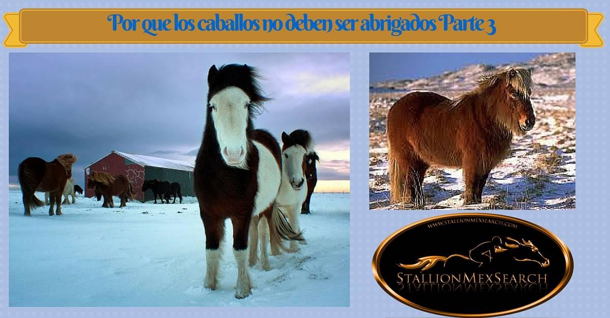 Por que los caballos no deben ser abrigados en Invierno Parte 3