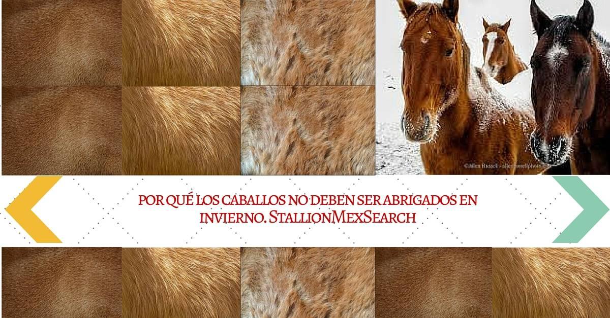 por qué los caballos no deben ser abrigados en invierno | StallionMexSearch