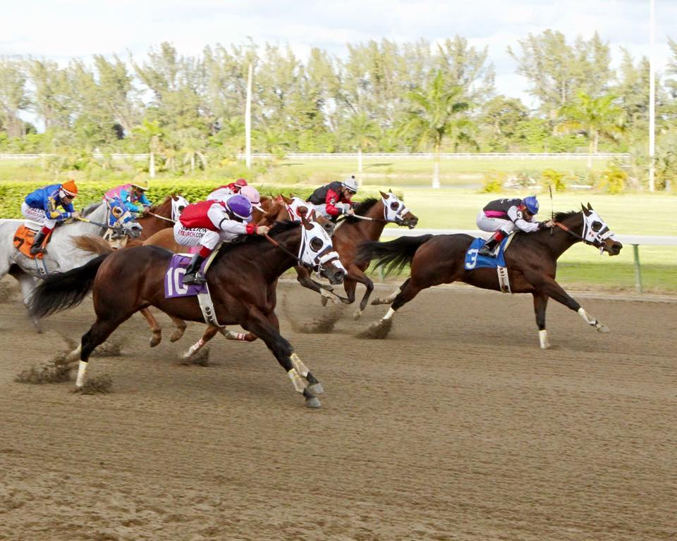 South Florida Derby 2016 Race