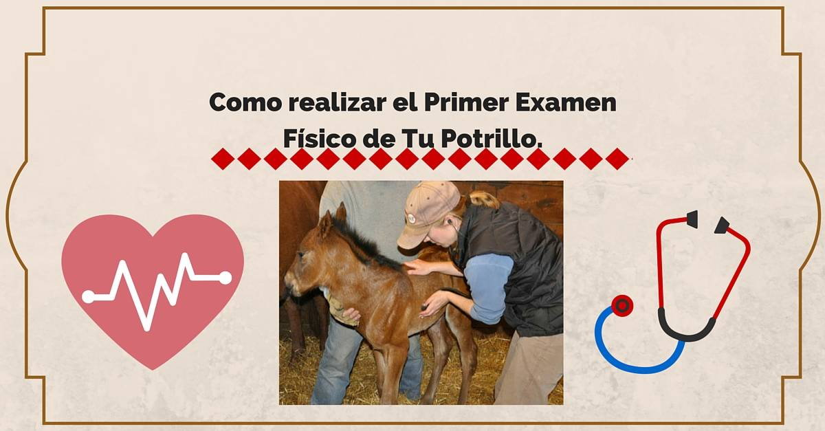 Primer Examen Fisico Equino | StallionMexSearch