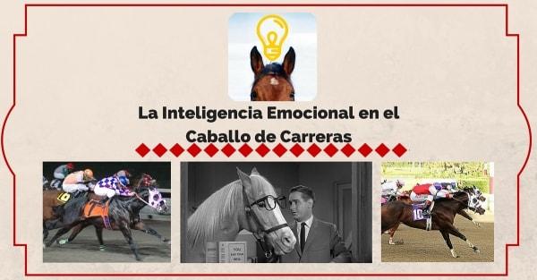 La inteligencia emocional en el caballo de carreras | StallionMexSearch