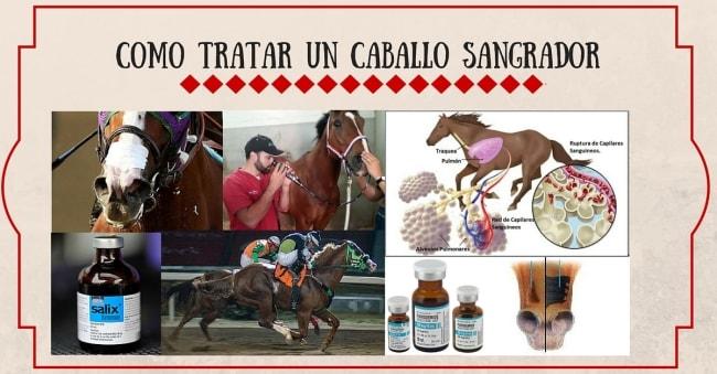 Como tratar un caballo sangrador | StallionMexSearch