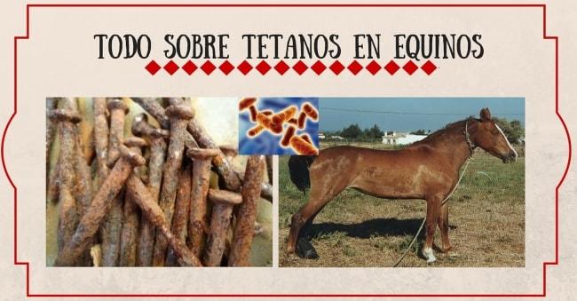 Tetano en Equinos | StallionMexSearch