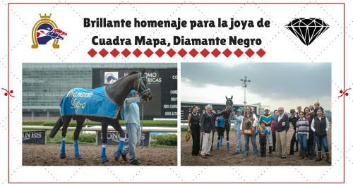 Brillante homenaje para Diamante Negro | Hipodromo de las Americas